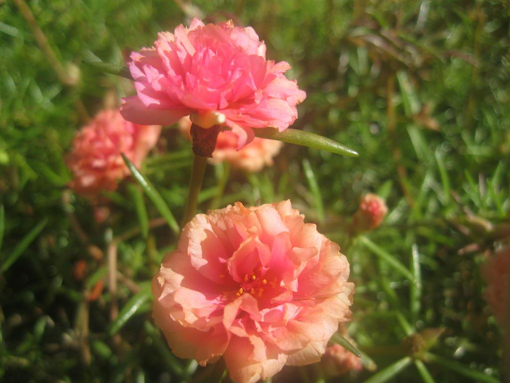 flower5 by imatrashcan2