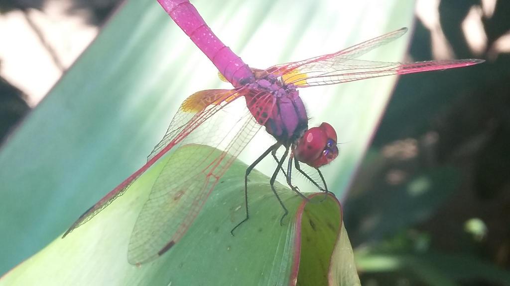 Dragonfly by imatrashcan2