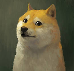 Network teaching - Doge by 6kart
