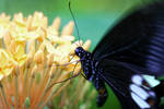 Butterfly Photo 8