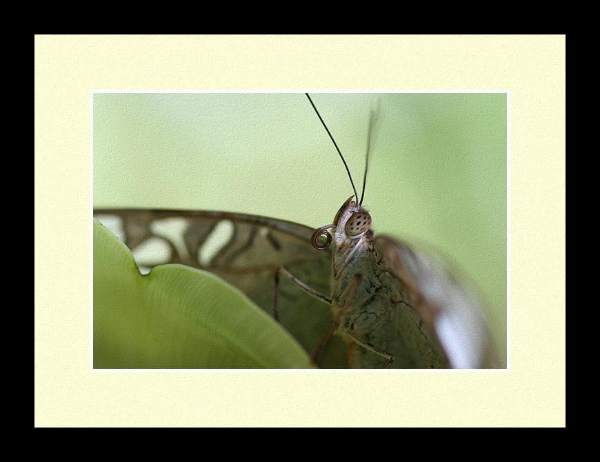 Butterfly Photo 60 by blookz