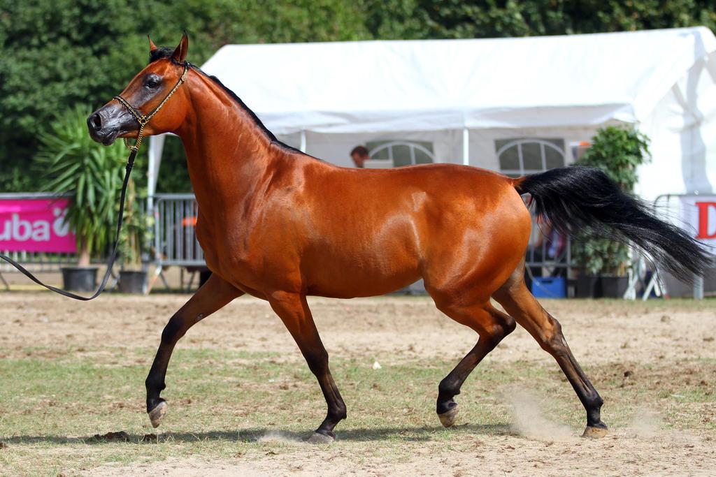 Arabian 19 by Kiwiaa