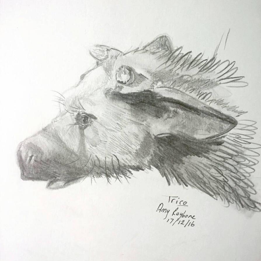 Trico by amyraybone101