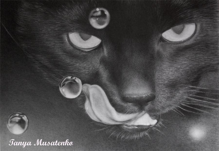 Cat by TanyaMusatenko