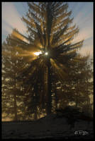 Last Rays of Light by Fullness