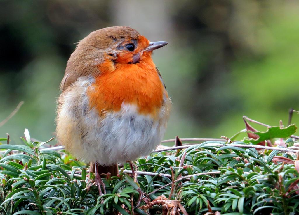 Round Robin! by smallsofthamish