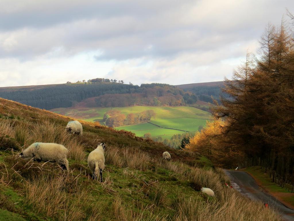 Sheepy Hollow by smallsofthamish