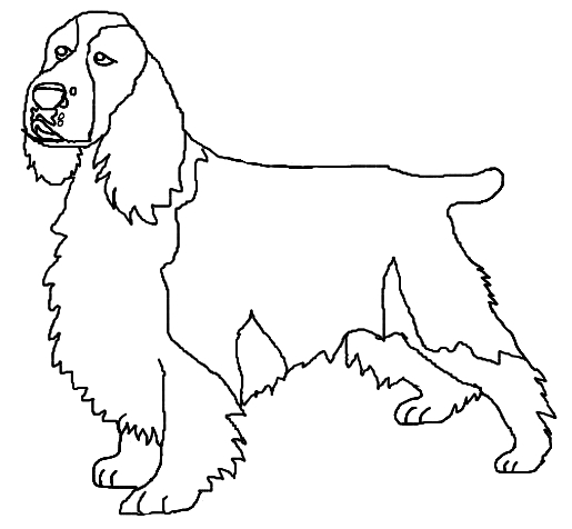 childrens coloring pages springer spaniel | English Springer Spaniel by SketchGlass on DeviantArt