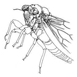 Cicada study by greytrousers