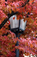 Lamp and Leaves by Londonbaby