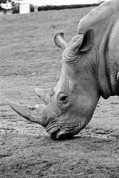 Rhino by Londonbaby