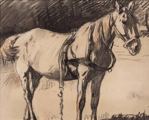 Horse Sketch 7