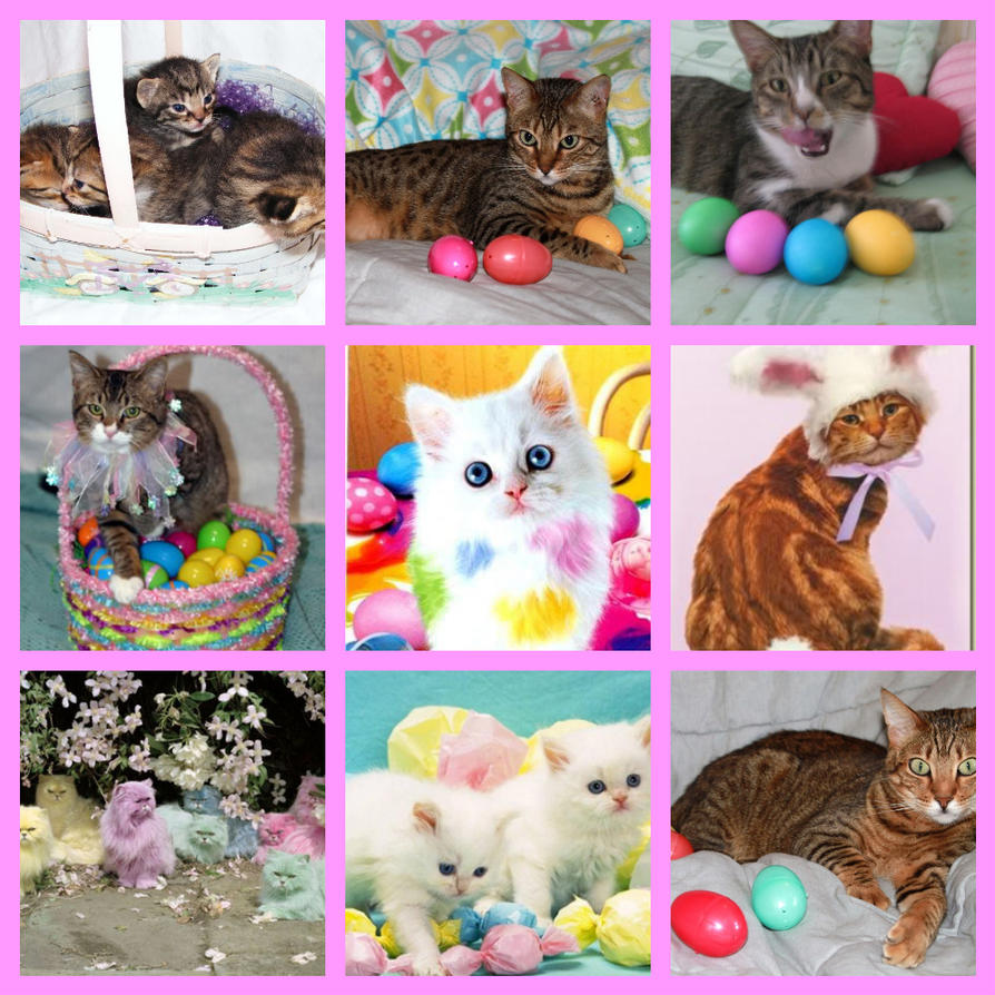easter backgrounds cat images - photo #34