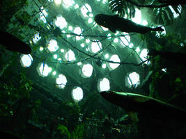 Rain Forest Exhibit X by Crackoala