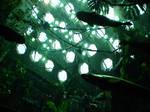 Rain Forest Exhibit X