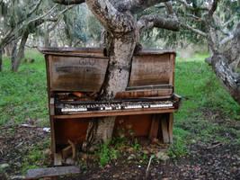 The Old Piano Tree by Crackoala