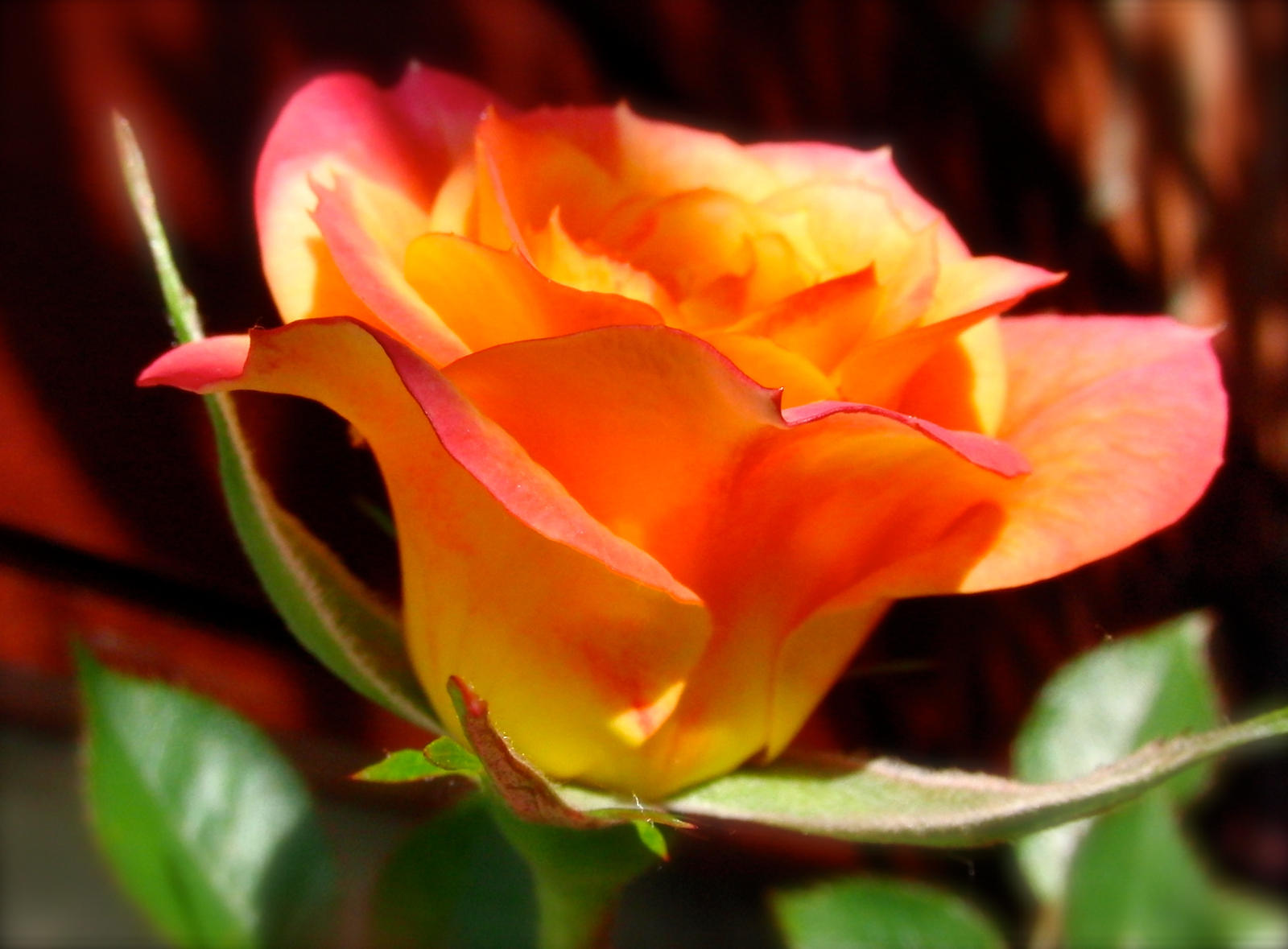 Mandarin by KateHodges