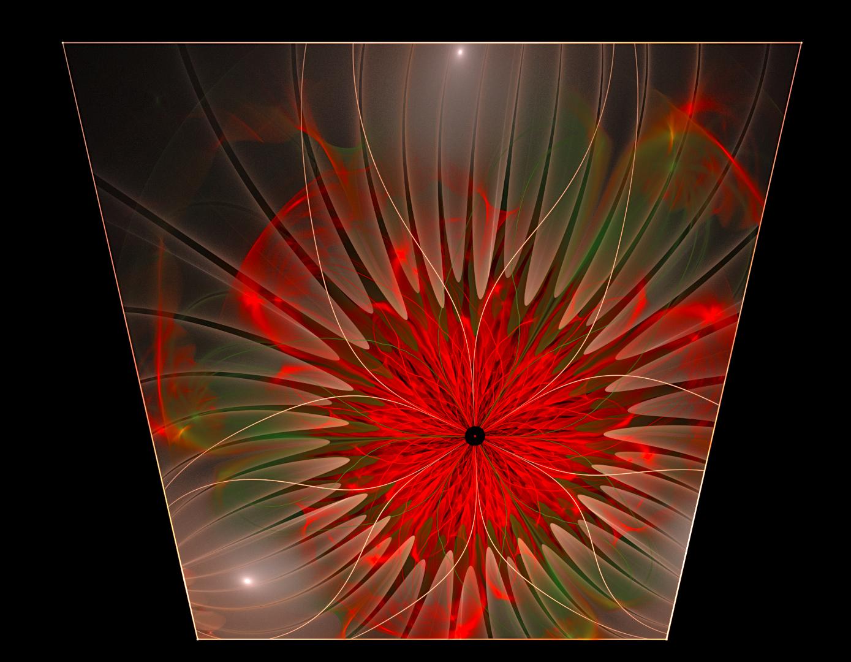 Framed Flower by KateHodges