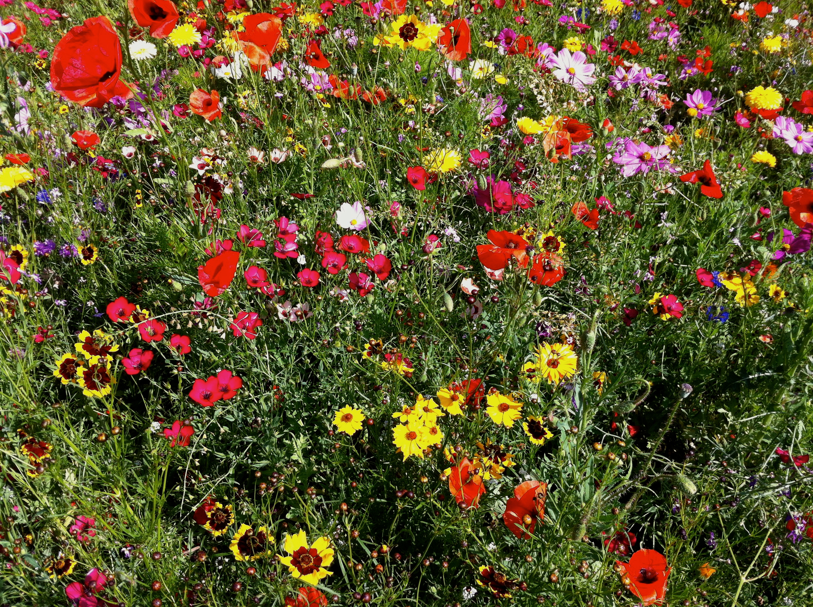 Wild Flowers by KateHodges