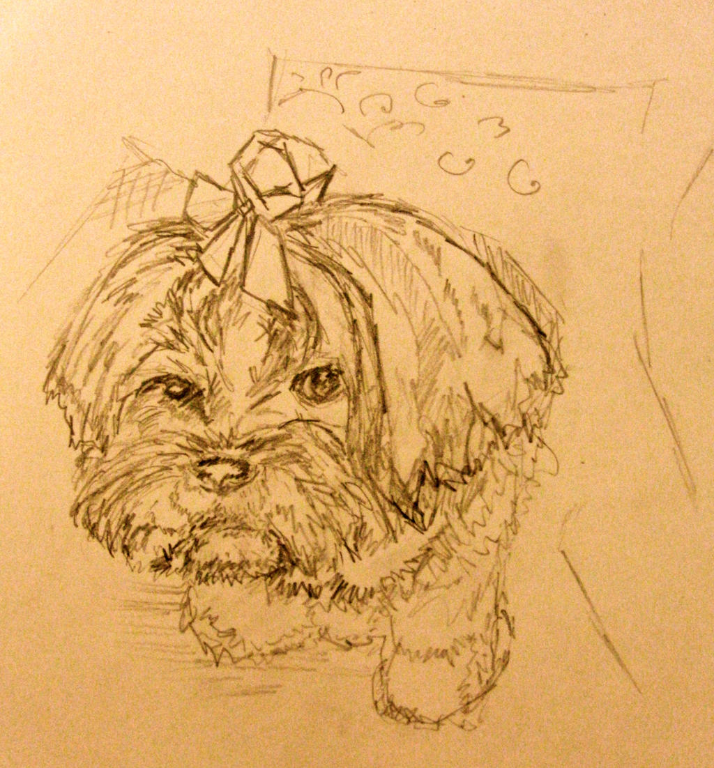 My friends Lhasa Apso by KateHodges