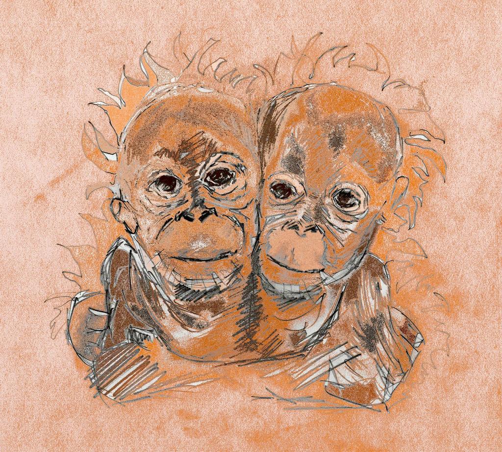 Orangutangs by KateHodges