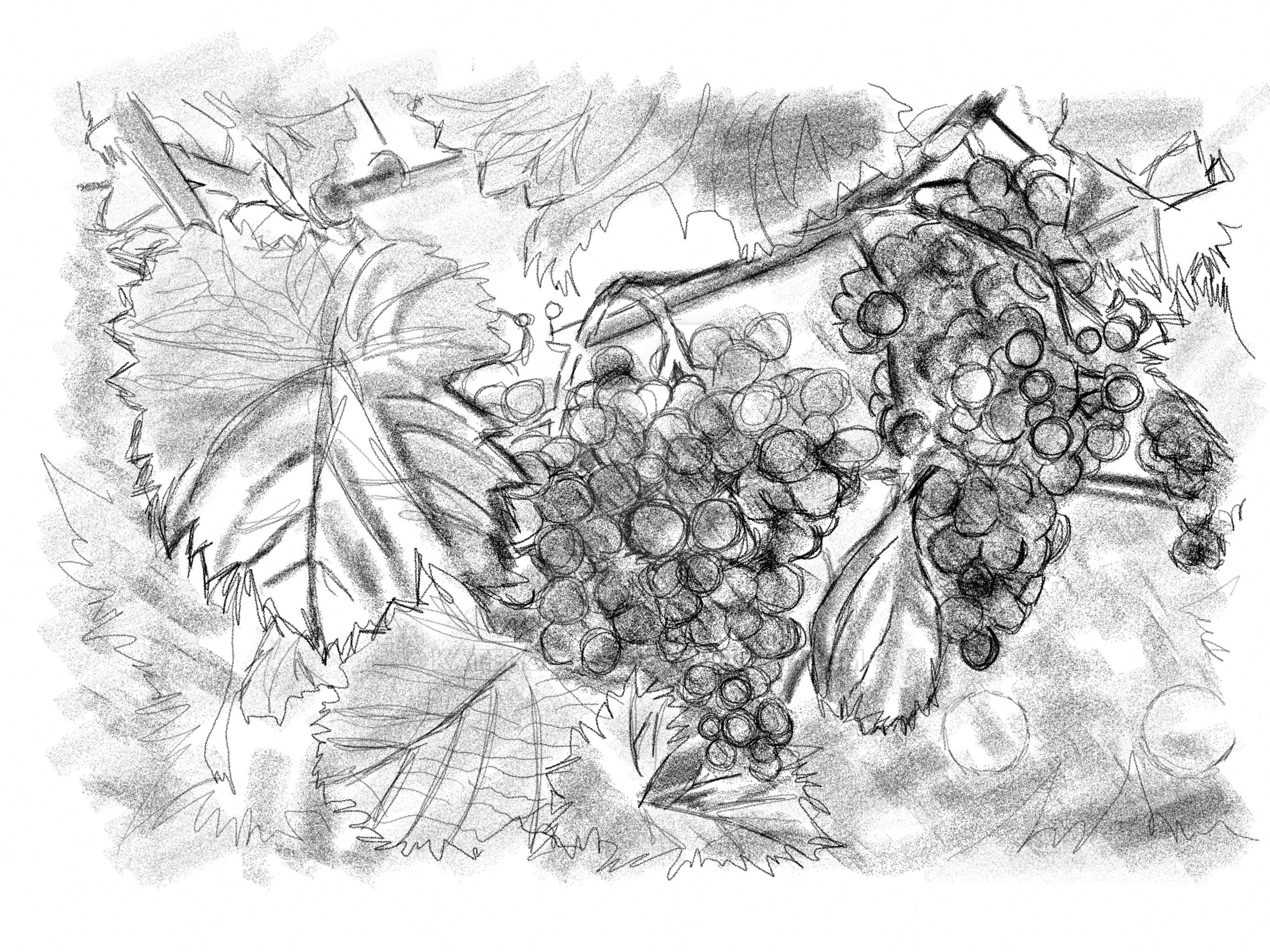 Grape Vine by KateHodges