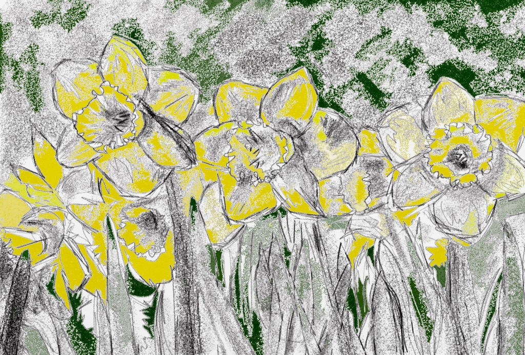 Daffodils. by KateHodges