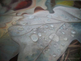 Leaves and drops by Kalmia