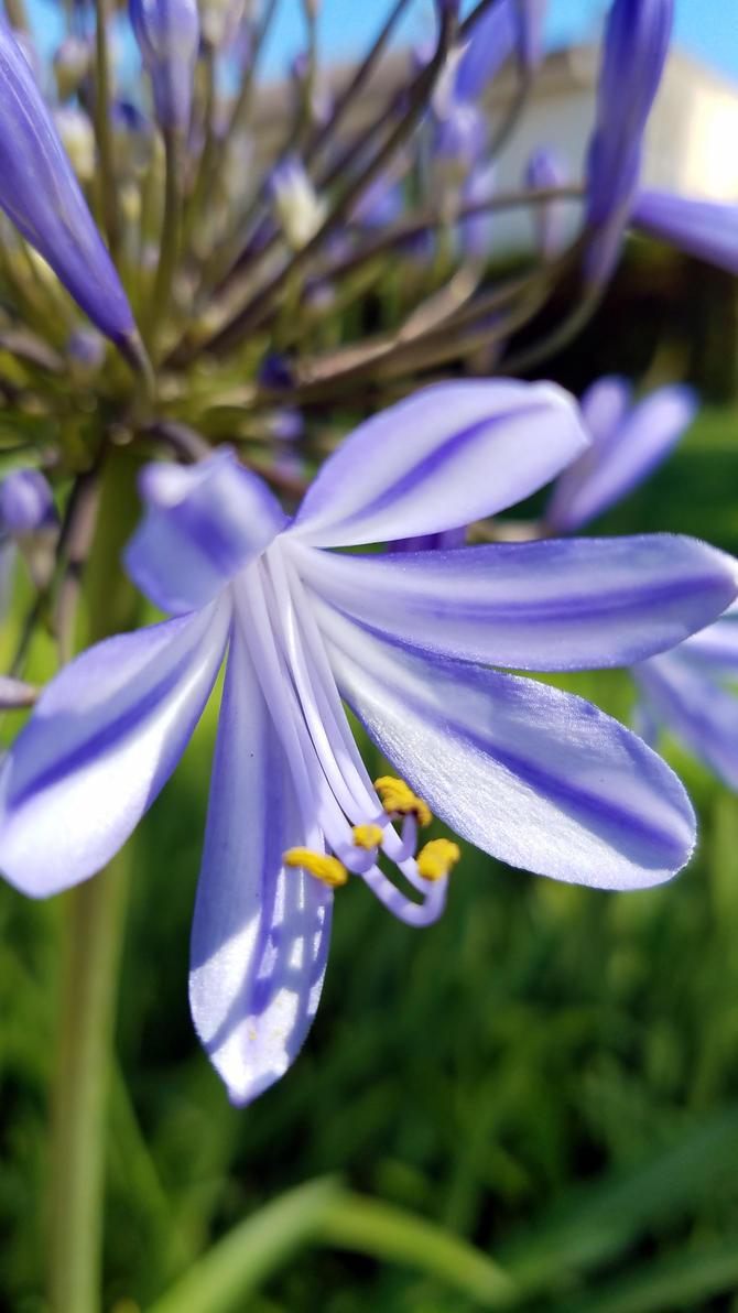 Blue Petals by BlackHawk00021