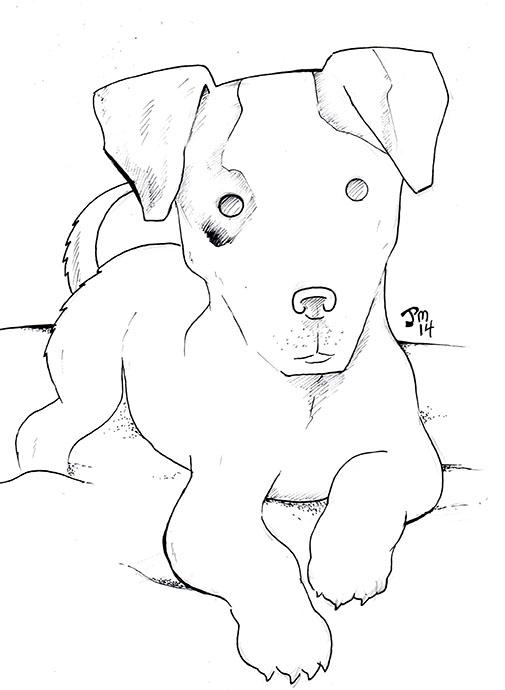 Jack Russell Terrier by norrit07