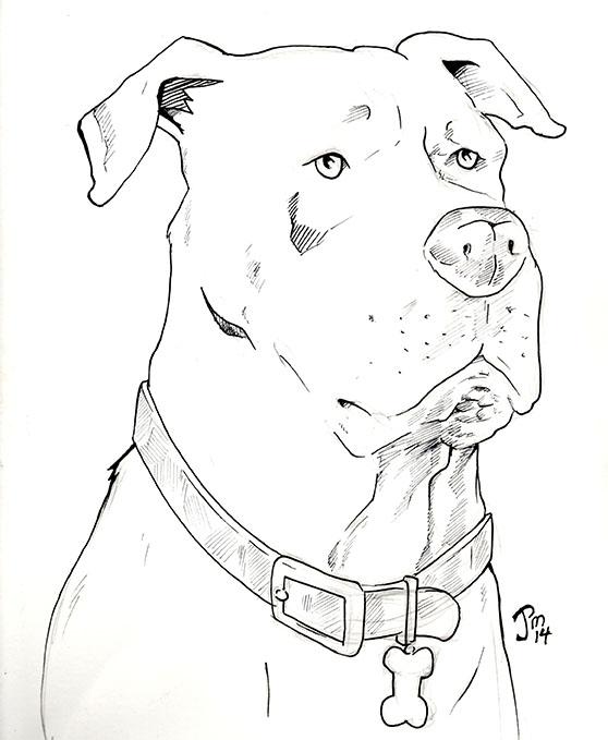 Pitbull-terrier by norrit07
