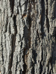 Bark Texture_002 by experiment24