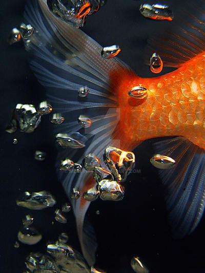 Mercury fish