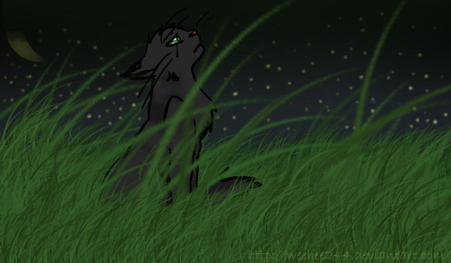 The Best Warriors Hollyleaf Art