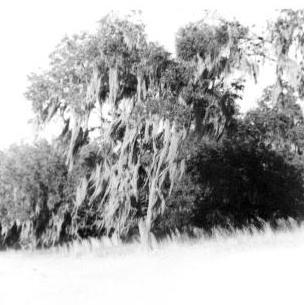 Willow by livyluv14