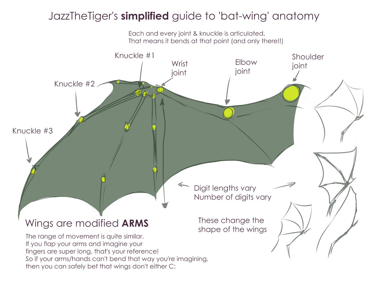 Jazz's simplified guide to  'bat-wing' anatomy