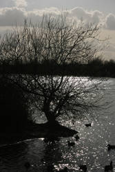 Tree at Branston