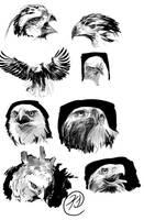 studies-eagles by tiggerfactory