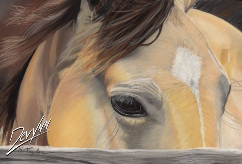 Window to the Soul - Pastel by Devynn