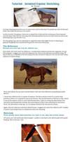 Tutorial: Horse Sketching
