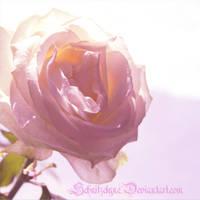 Rose by ElyneNoir
