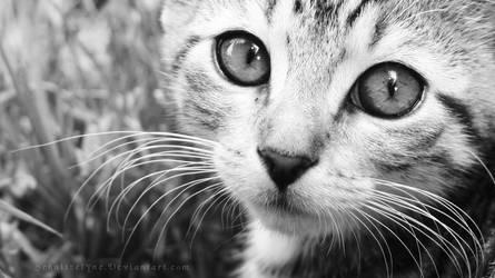 Kitten Eyes by ElyneNoir