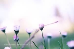 Daisies by ElyneNoir