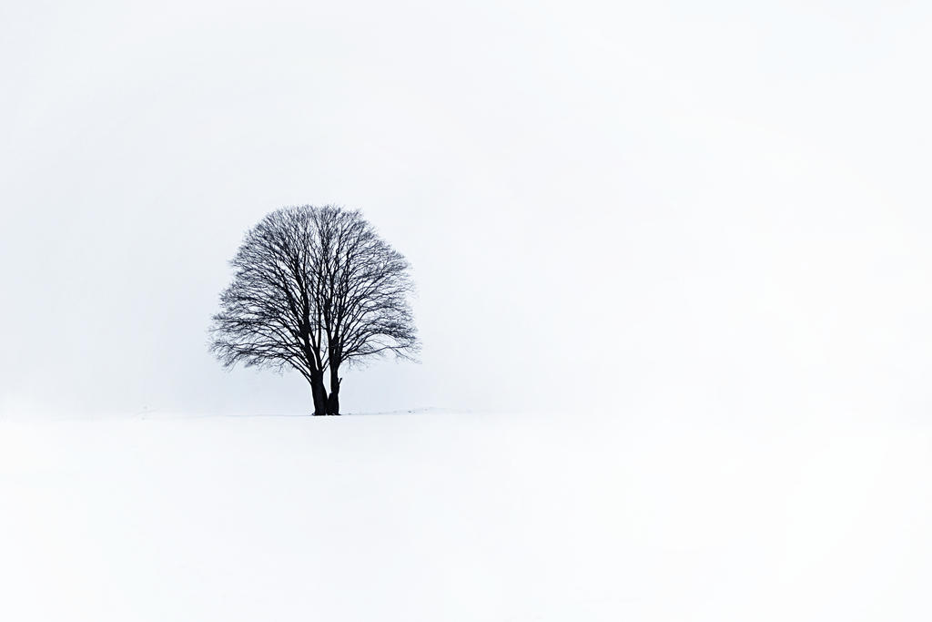 White by ElyneNoir