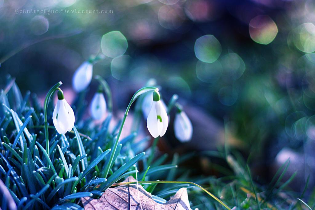 Snowdrops by ElyneNoir