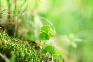 Green by ElyneNoir