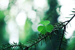 Green III by ElyneNoir