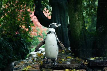 Penguin II by ElyneNoir