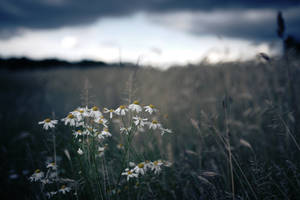 Calm Before The Storm by ElyneNoir
