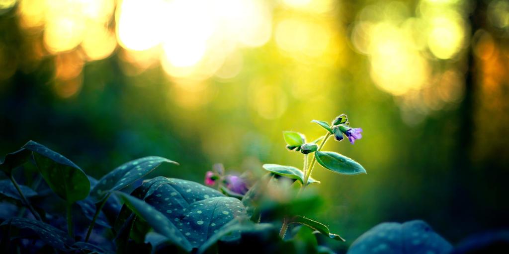 Evening Sun by ElyneNoir